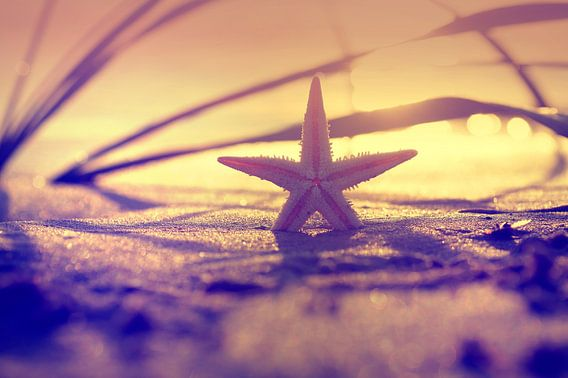 Starfish in the light of sunset