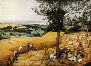 De Oogsters, Pieter Bruegel van