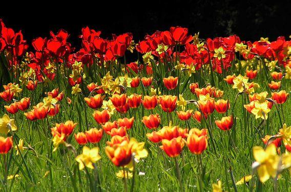 Tulpenwiesen