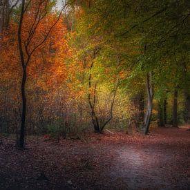 Herfstkleuren van Erwin Stevens