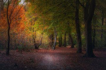 Herbstfarben von Erwin Stevens