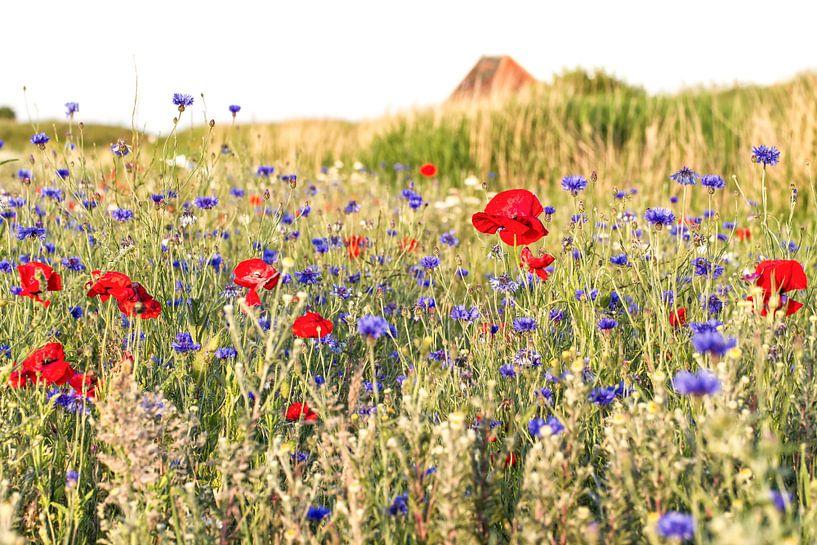 Veldbloemen op Texel / Field flowers on Texel van Justin Sinner Pictures ( Fotograaf op Texel)