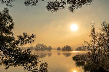 Gouden zon van Marian Schepens