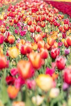 bollenveld met tulpen van Hélène Wiesenhaan