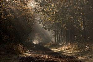 Maashorst in herfstsferen