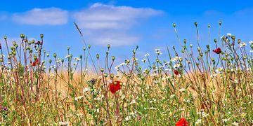 Rand van een tarweveld met rode klaprozen en witte bloemen van MPfoto71