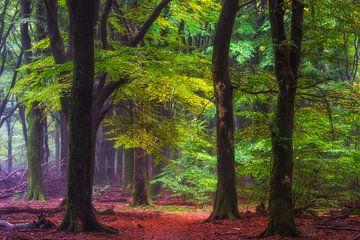 Ruhe im Speulder-Wald von Lars van de Goor