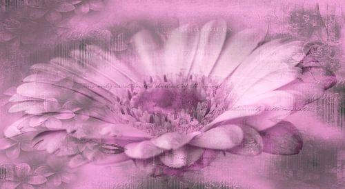 Gerbera roze, met tekst