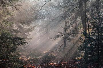 Neblige Waldlandschaft von Dorien van Witteveen