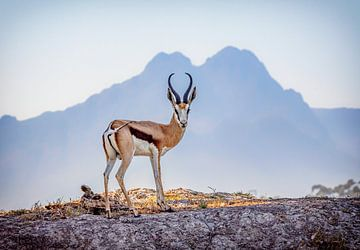 Impala von jacky weckx