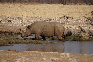 Neushoorn neemt bad von Erna Haarsma-Hoogterp