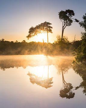 Nebliger Sonnenaufgang, Oisterwijk, Niederlanden von Daniel Van der Brug