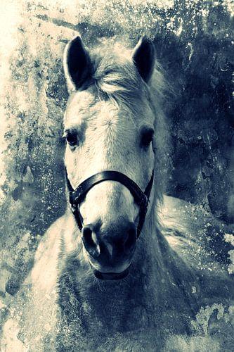 HORSE - CROSS/PROCESS