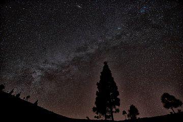 Milchstrasse im Teide Nationalpark von Angelika Stern