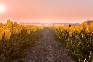 Gelbe Tulpen bei Sonnenaufgang von Ruud van der Aalst