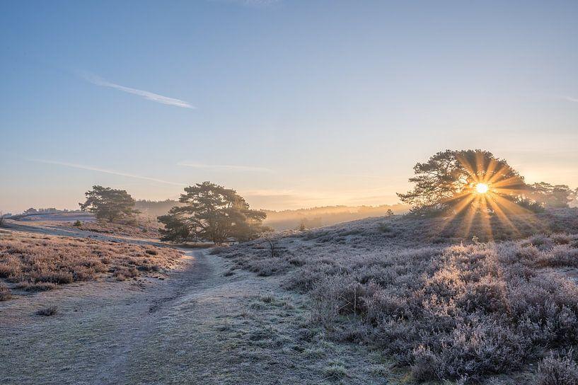 Sonnenaufgang auf der Heide an einem kalten Frühlingsmorgen von John van de Gazelle