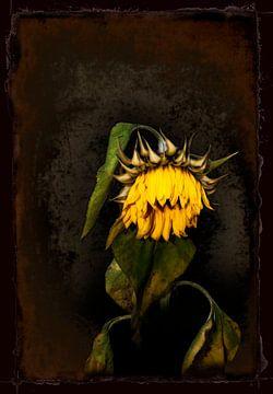 Drawn By Nature (Sonnenblume #001) von Peter Baak