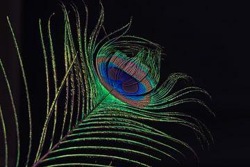 Pauwenveer in het donker sur Celina Dorrestein