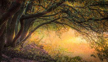 Provence I van Adrien Hendrickx