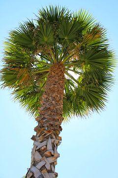 Palmboom von Rick van den Bovenkamp