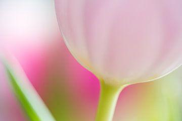 Tulp sur Judith Borremans