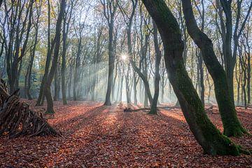 zonlicht door de bomen van Michael van Dam