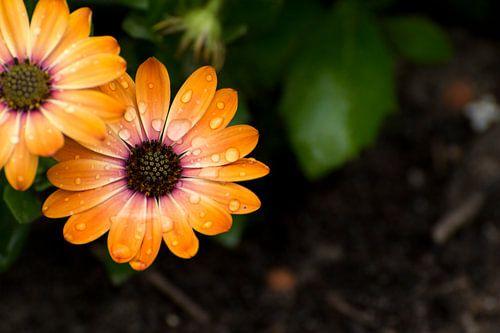 Oranje bloemen van Jeantina Lensen-Jansen