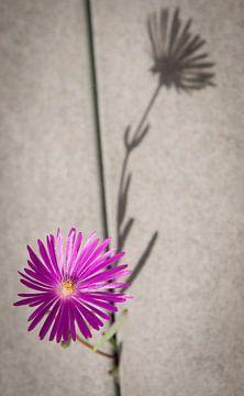 Schaduw van een bloem van Ellis Peeters