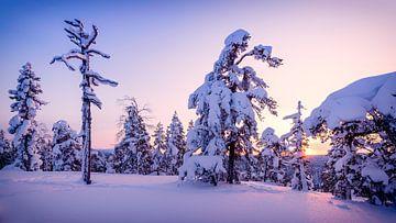 Sonnenuntergang im verschneiten Wald von Denis Feiner