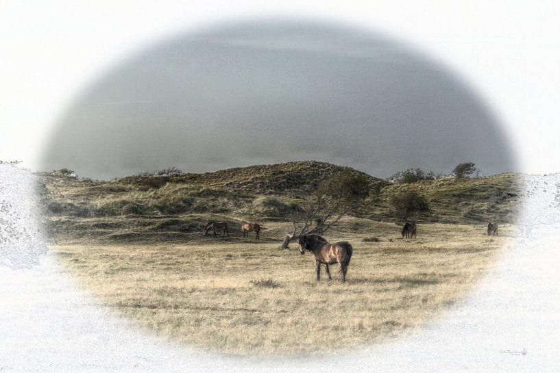 Pony van Erik Reijnders