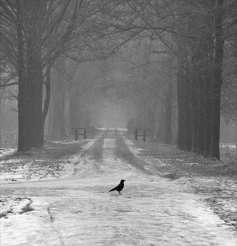 The cold path van