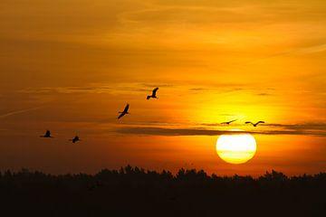 Kranen bij zonsopgang van Angelika Stern