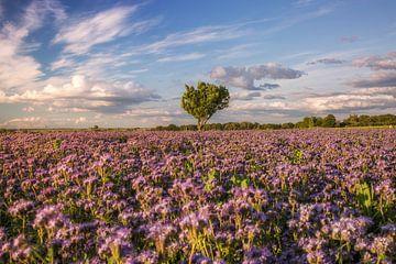 Blumenwiese von Sergej Nickel