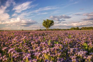 bloemenweide van Sergej Nickel