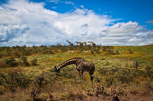 Giraffe Parade von BL Photography