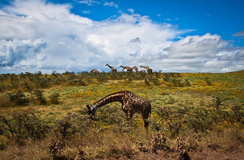 Giraffe Parade van BL Photography