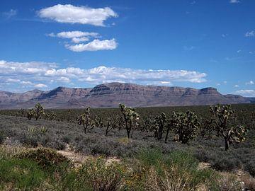 Landscape Grand Canyon von Marek Bednarek