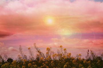Lichtbollen boven bloemen van Carin Klabbers