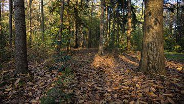 Pfad der Blätter von Kenji Elzerman