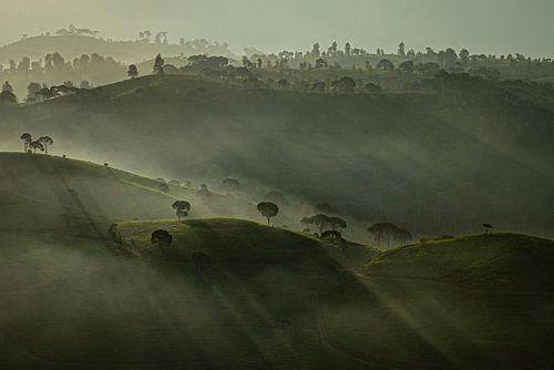 Mistige morgen - theeplantage Azië