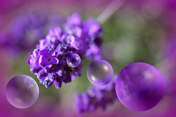Lavendelblueten van Vera Laake