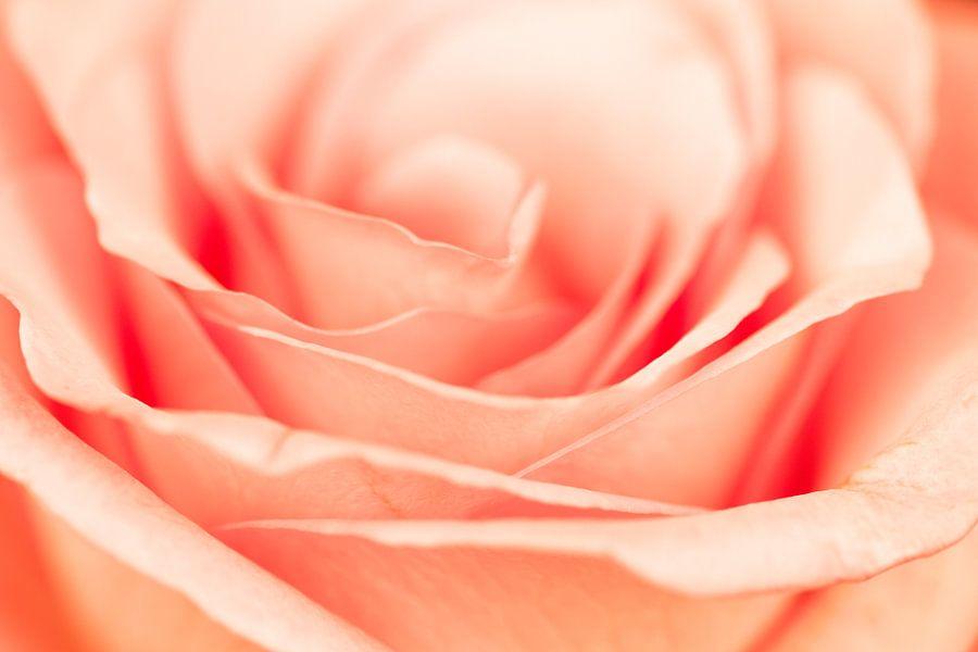 Roos van Math Bartholomeus