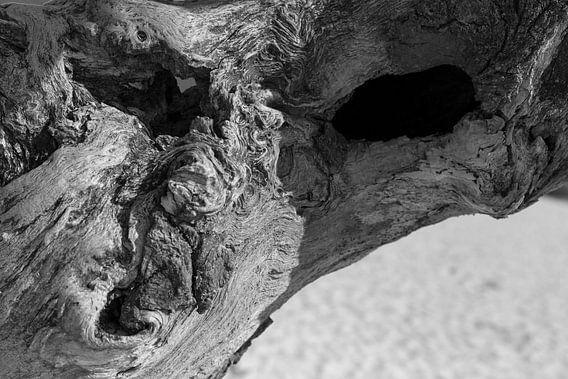 Boze boom, Halloween, gezicht in een dode boom op de Loonse en Drunense duinen, Noord Brabant, Neder