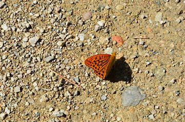 Le papillon projette une ombre sur Susanne Seidel