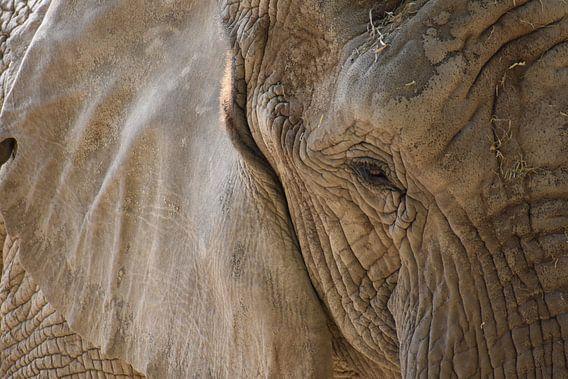 Olifant close up