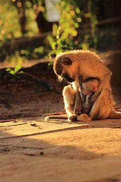 Vervet moeder aap met baby van Bobsphotography