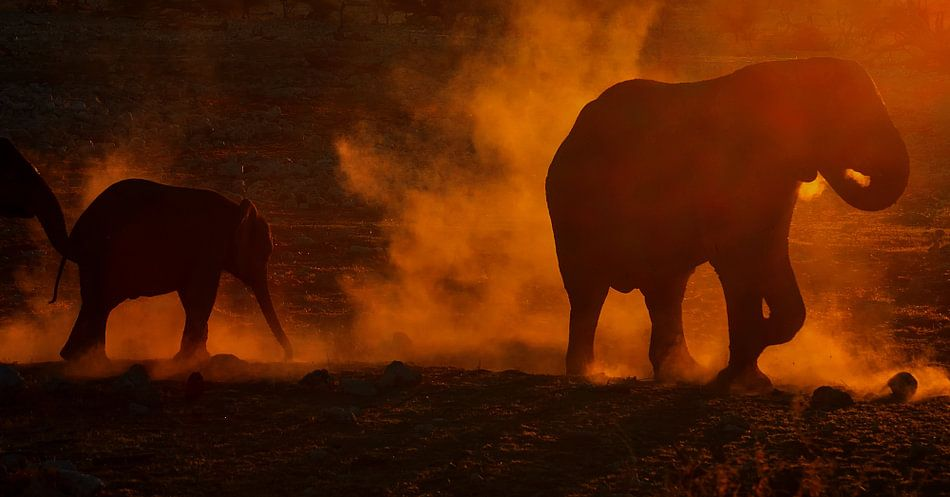 Olifanten bij zonsondergang. Jumbo Dust  van Anita Loos