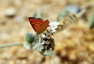 Oranje vrolijkheid 1 van Silvia van Zutphen