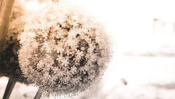 Weiße Blumen / Hochzeitskartenmotiv von Christoph Kötteritzsch