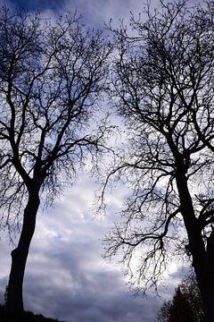 Bäume im Winter von Ulrike Leone